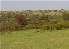 Maasai Mara,Talek River