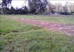 Ridgeways, Garden Estate