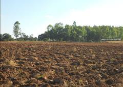 Choma Farm 2, Choma