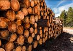 UK Forestry Market UpdateUK Forestry Market Update - 2018