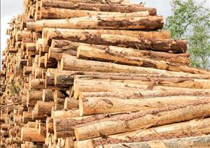 UK Forestry Market UpdateUK Forestry Market Update - 2019