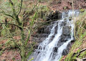 Monmouthshire Country Office Outlook - 2011Monmouthshire Country Office Outlook - 2011 - 2011