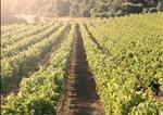 Global Vineyard IndexGlobal Vineyard Index - 2014